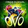 Сочи, OVO* Cirque du Soleil *ОВО, Цирк дю Солей