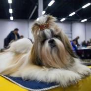 Выставка собак «Sochi Dog Show» 2018 фотографии