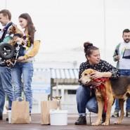 Выставка беспородных собак «Кубок Барбоса» 2019 фотографии