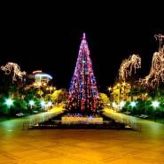 Новогодние мероприятия в Лазаревском районе 2017/18 фотографии