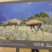Выставка «Природа Кавказского заповедника» фотографии