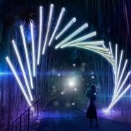Выставка на открытом воздухе «Сад Света. Легенда о друидах» фотографии