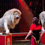 Цирковое шоу «Белые львы Африки» 2018 фотографии