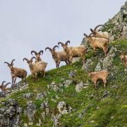 Фотовыставка «Природа кавказского заповедника» фотографии