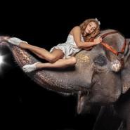 Цирковое шоу «Девочка и слон» 2021 фотографии