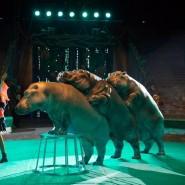 Цирковое шоу «Гиппопотамус» 2017 фотографии