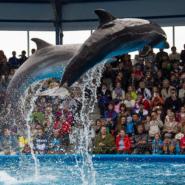 Дельфинарий в «Сочи Парке» фотографии