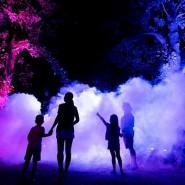 Ночной маршрут «Оживший парк» в парке «Южные культуры» 2020 фотографии