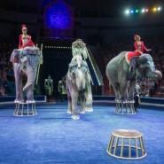 Циркового шоу слонов «Инди-Ра» 2020 фотографии