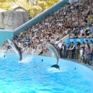 День рождения Сочинского дельфинария 2017 фотографии