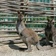 Зоопарк «Белый кенгуру» фотографии