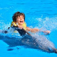 Плавание с дельфинами в Сочи фотографии
