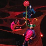 Шоу Cirque du Soleil «OVO» 2018 фотографии