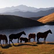 Фотовыставка «Северный Кавказ. Семь историй» фотографии