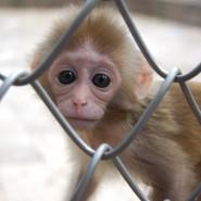 Питомник обезьян фотографии