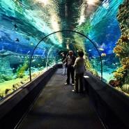 Сочинский океанариум  фотографии