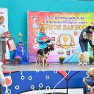 Выставка беспородных собак «Кубок Барбоса 2017» фотографии