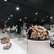 Интерактивная выставка «Гиганты вечной мерзлоты» фотографии