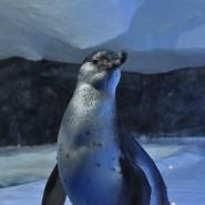 Пингвинарий в Сочи 2020 фотографии