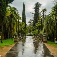 Онлайн-экскурсии по парку «Дендрарий» 2020 фотографии