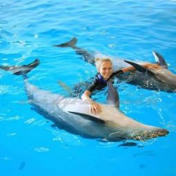 Плавание с дельфинами в Сочи