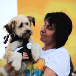 Выставка беспородных собак «Кубок Барбоса» 2019