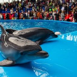 Открытие дельфинария Сочи Парка 2020