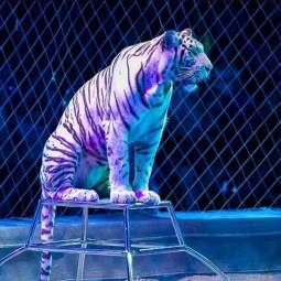 Цирковая программа «Планета цирк» 2018