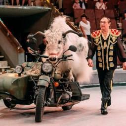 «Бизон-шоу» в Cочинском цирке 2017