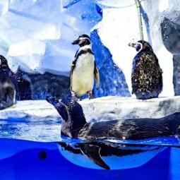 Пингвинарий в Сочи 2020