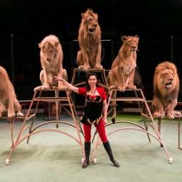 Цирковое шоу «Белые львы Африки» 2018