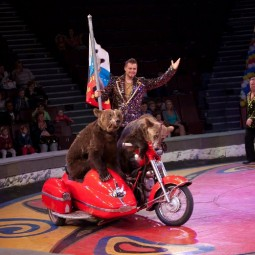 Цирковое шоу «Цирк Филатовых» 2018