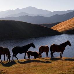 Фотовыставка «Северный Кавказ. Семь историй»