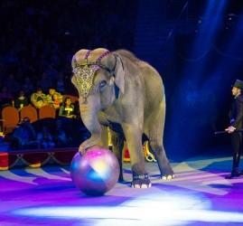 Циркового шоу слонов «Инди-Ра» 2020