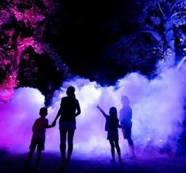Ночной маршрут «Оживший парк» в парке «Южные культуры» 2020