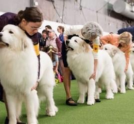 Выставка собак «Sochi Dog Show» 2018