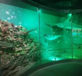 Экскурсия и квест-игра «Путешествие по дну морскому» 2021
