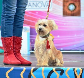 Выставка беспородных собак «Кубок Барбоса» 2018