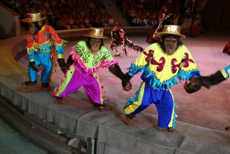 Цирковое шоу шимпанзе «Бинго-Бонго» 2019