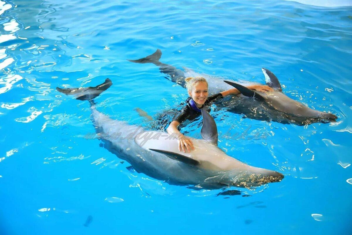 Плавание сдельфинами вСочи