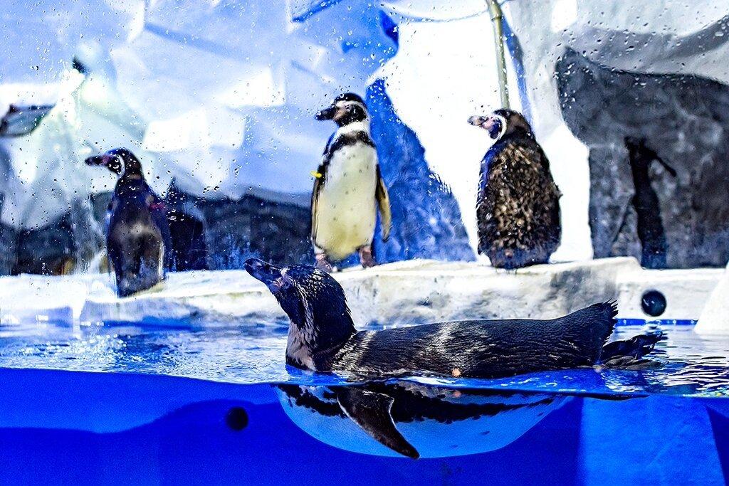 Пингвинарий вСочи 2020