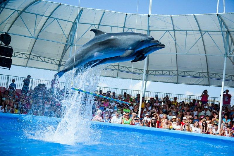 День рождения Сочинского дельфинария 2017
