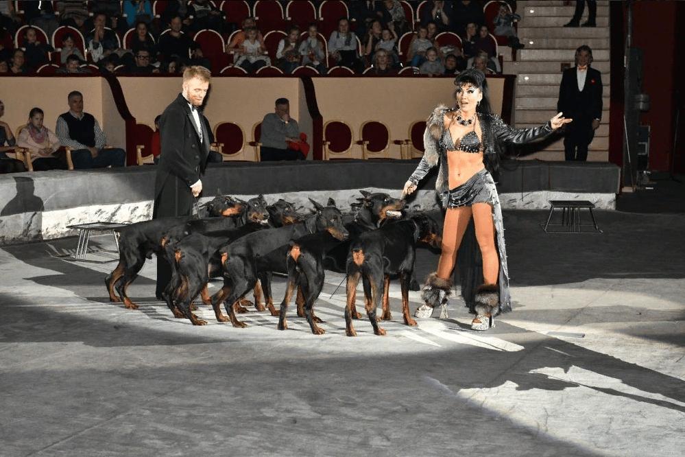 Цирковое шоу «Тотем» 2019