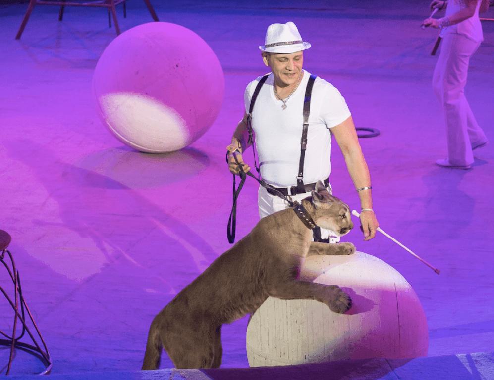 Цирковое шоу «Джемелли» 2017