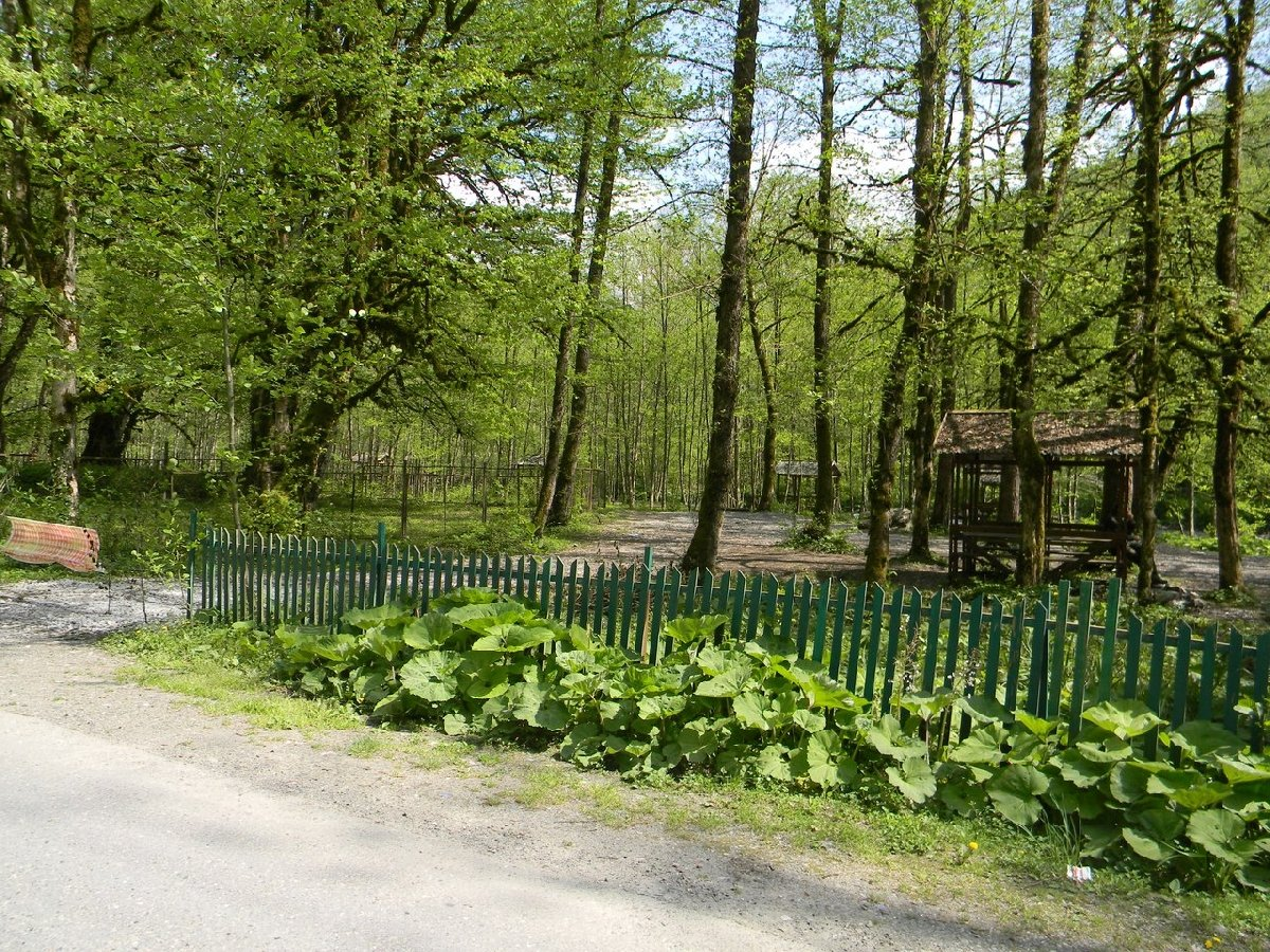 Пикниковая поляна «Медвежий угол»