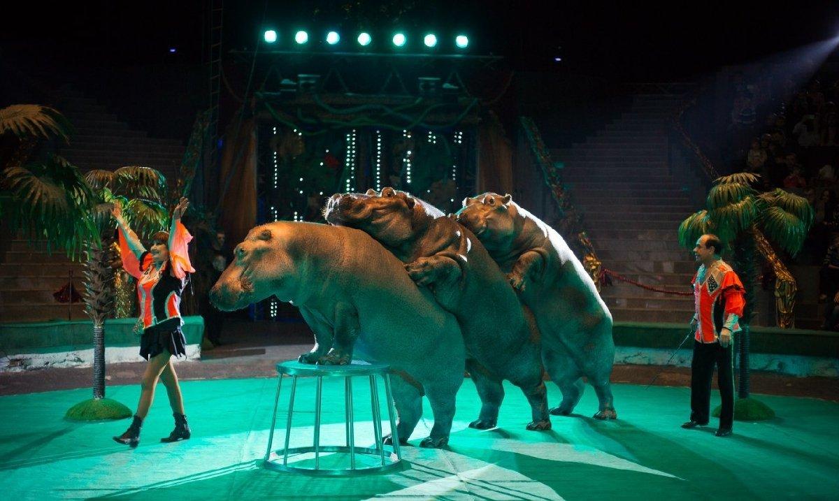 Цирковое шоу «Гиппопотамус» 2017