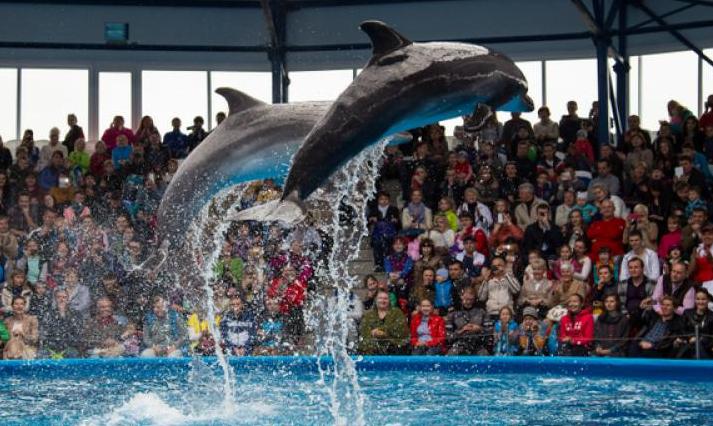 Дельфинарий в«Сочи Парке»